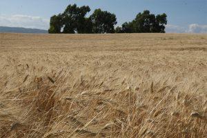 Puesta en marcha del proyecto ECOCEREAL+ para el apoyo al sector del cereal ecológico